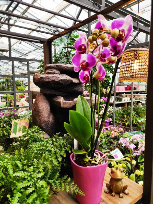 come si curano le orchidee la nostra guida pratica con consigli e segreti