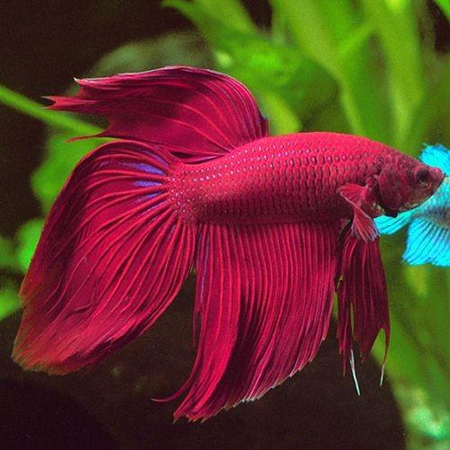 pesci mese di novembre