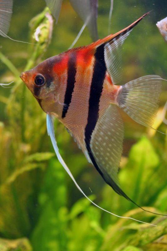 pesci in promo dicembre fasoli piante
