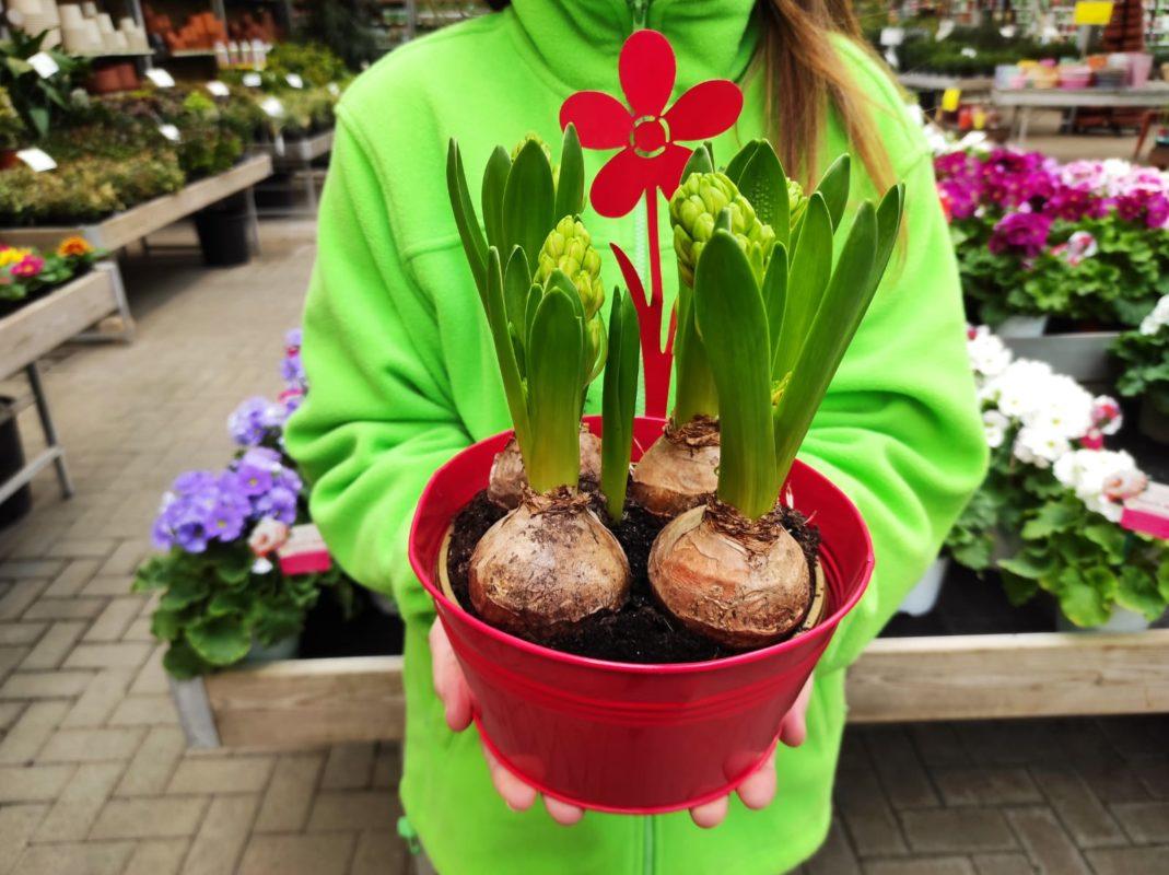piantare bulbi ora per vederli fiorire in primavera cose da sapere
