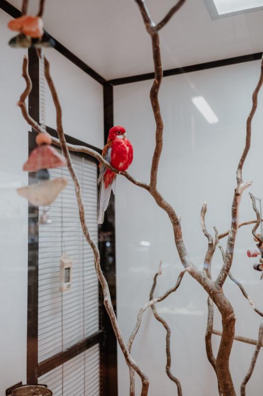 uccelli domestici indicati casa