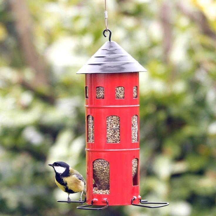 come possiamo aiutare gli uccelli selvatici che visitano il nostro giardino durante l'inverno