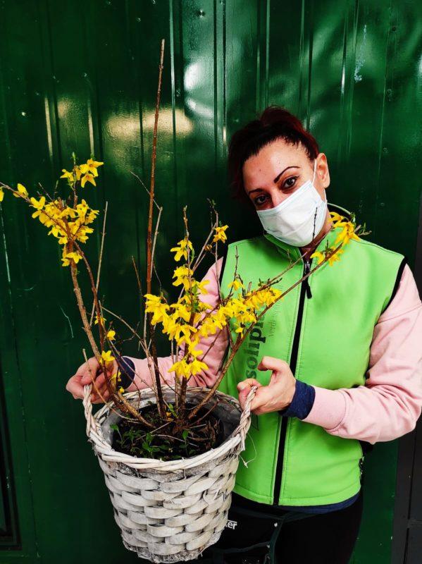fiori di marzo