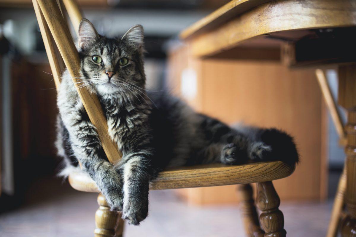 giornata nazionale del gatto le nostre promo speciali