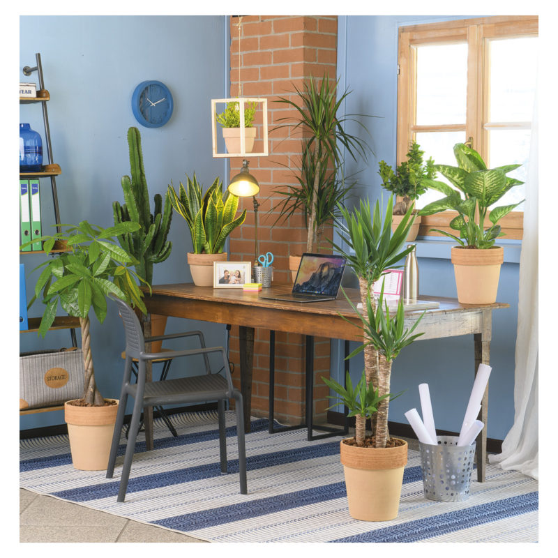 piante smartworking