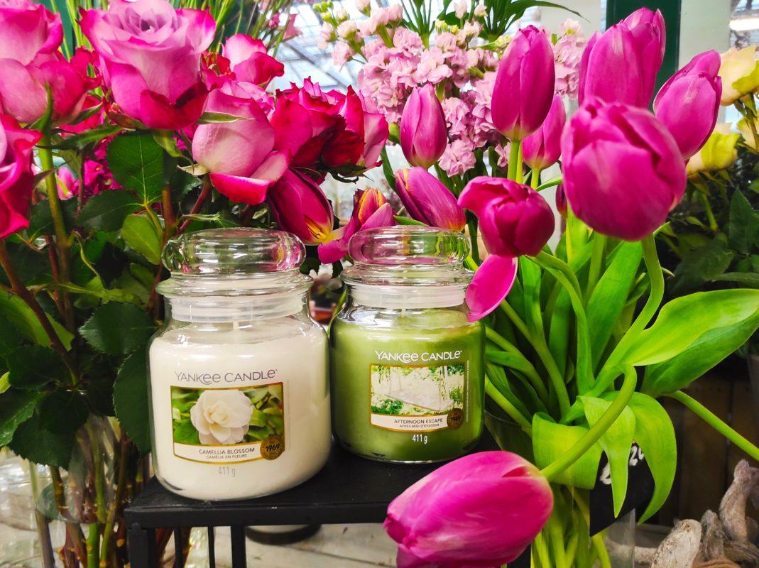 yankee candle offerta maggio fasoli piante